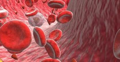 Interno vaso sanguigno